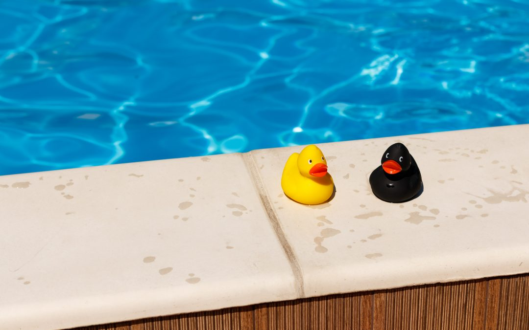 How to keep wildlife out of your swimming pool